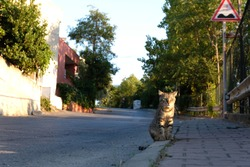 Cat on the street. Stray cats on the sidewalk
