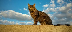 Cat on the wall and cloudy blue sky in background