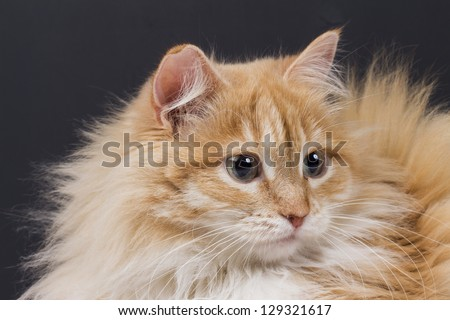 cat on the white background