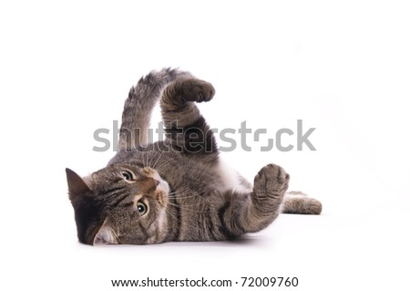 Cat on the white isolated background