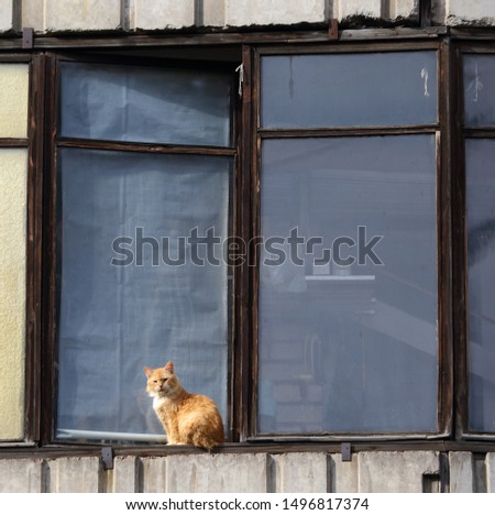 Cat on the windowsill of a house