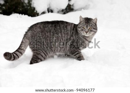 cat on white snow