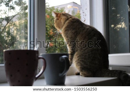 Cat on windowsill and cup of tea