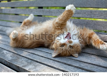 cat on wooden bench