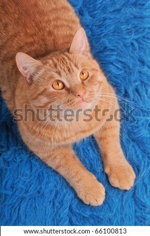 Cat on Woolen Carpet Looking above