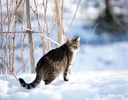 Cat out in the snow