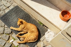 Cat outdoor in Istanbul. Stray cats in Turkey. Street red cat sleeps on the mat at the entrance to the house