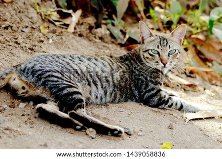 cat outdoor, Those stiff hairs on your cat's face and legs don't just add to her cuteness -- they have real work to do. Whiskers are GPS and radar systems for your cat. #1439058836