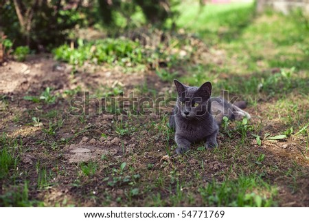 cat outdoors