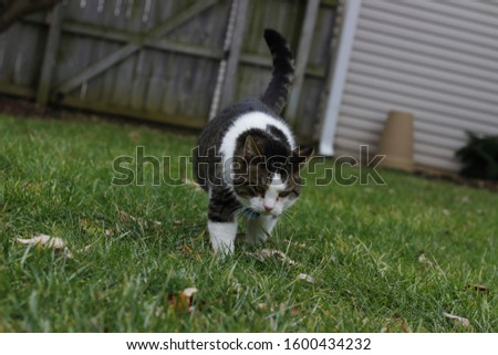 Cat outside walking around and playing