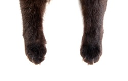 Cat paw isolated on white background. Black color.