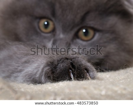 problems with declawing cats