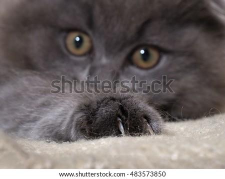Cat defecating on floor