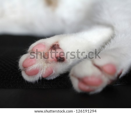 Cat paws with pink pillows