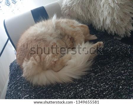 cat persian maca dont like pics