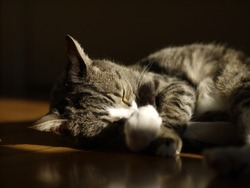 cat pet animal relaxing indoors cateyes whiskers meow cute portrait