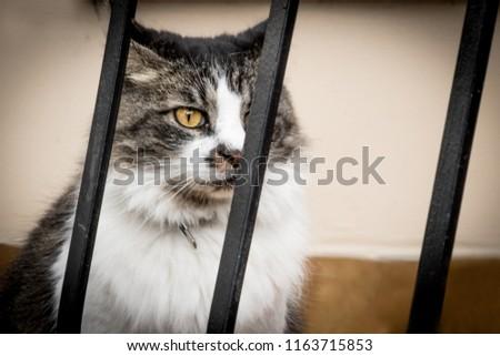 CAT PET KITTY FEAR FELINE JAIL FELINE YELLOW EYES HORN FUR #1163715853