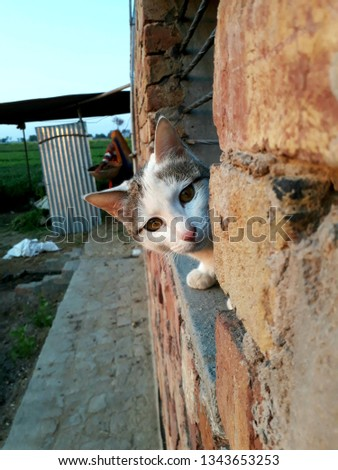 Cat pic natural clicks