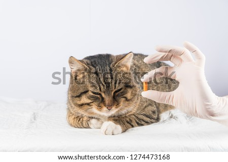 cat pill. sick animal. vet. medicine cat give the cat a pill. #1274473168