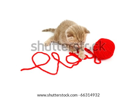 cat play in red wool