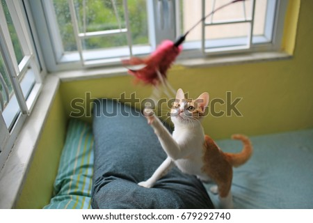 Stock Photo cat playing have fun