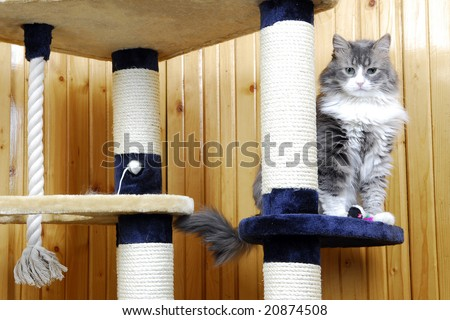 Cat playing in a huge cat-house - stock photo