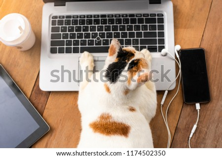 Stock Photo Cat playing on laptop computer or notebook with mobile phone or tablet and cup of coffee take home, it's on wooden table and look like it's working at laptop computer ,this image is lifestyle concept