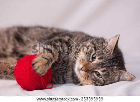 cat playing with ball of red yarn on white background
