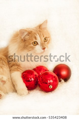 cat playing with Christmas balls, Christmas decorations, pet on a light background, red cat playing, #535423408