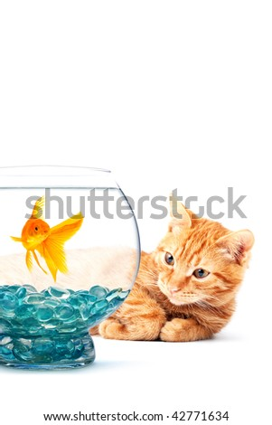 Cat playing with goldfish