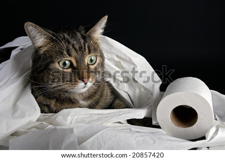 Cat playing with toilette paper