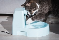 Cat plays with water dispenser or fountain. Pet thirst. Dehydration in a cat.