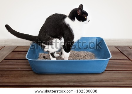 Cat poops in the litter