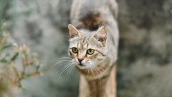 Cat portrait. A pretty cute cat with yellow eyes stands and looks to the side. View from above. Cat background.
