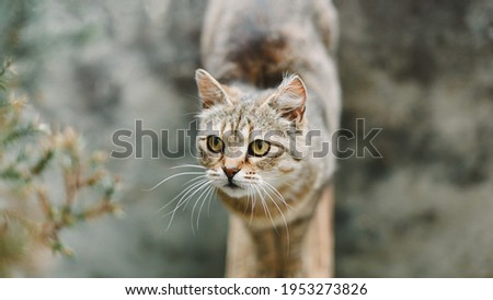 Cat portrait. A pretty cute cat with yellow eyes stands and looks to the side. View from above. Cat background. Stock photo ©