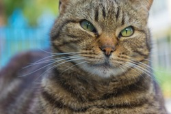 Cat portrait close up. Cat face.Pets and lifestyle concept.