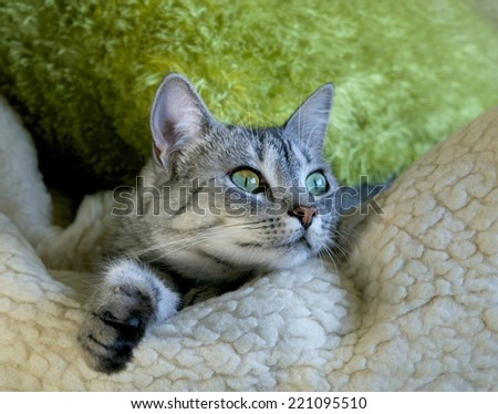 Cat portrait close up on sofa, lazy cat face close up, lazy cat on day time, animals, domestic cat, relaxing cat, cat resting, portrait of sad cat, happy cat, smiling cat, cat at home