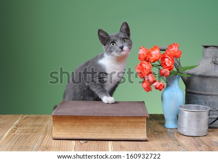 Cat posing for on books and flowers in a vase