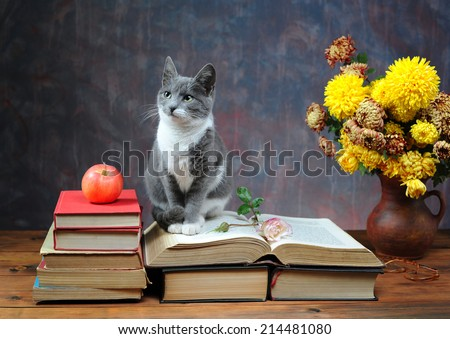 Cat posing for on books and flowers in the studio