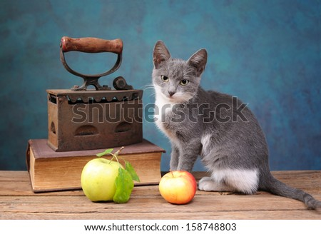 Cat posing next to an old irons, books and apple