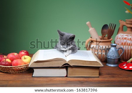 Cat posing on the books and different things