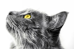 Cat profile high contrast black white - isolated white background