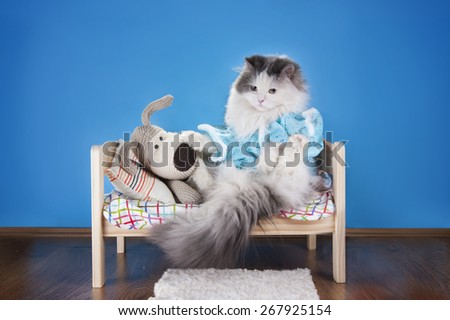 cat reading a tale toy dog