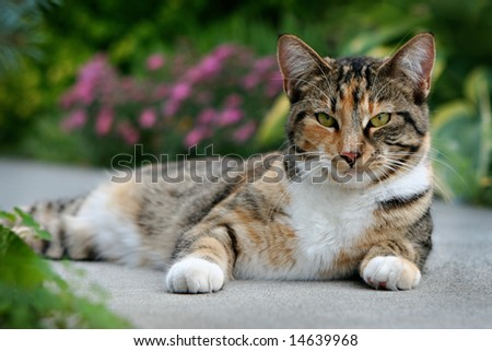 Cat Relaxing on a Path