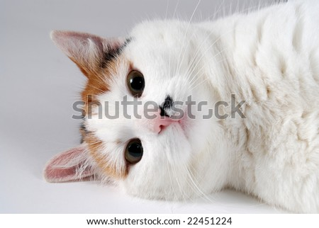 Cat resting against a gray background