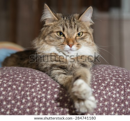 Cat, resting cat on a sofa in colorful blur background, cute funny cat close up, young playful cat on a bed, domestic cat, relaxing cat, cat resting, cat playing at home, elegant cat