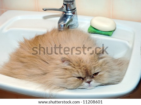 cat resting in the bathroom sink