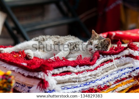 Cat resting on the carpets