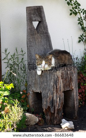 cat resting on the old wooden chair