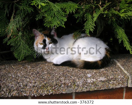 cat resting under the trees